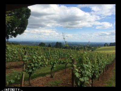 Limo Tour to Amorea Vineyards
